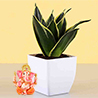 2 Layer Lucky Bamboo With Free Laxmi Ganesh Coin