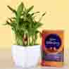 2 Layer Lucky Bamboo & Cadbury Celebrations