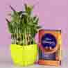 2 Layer Bamboo & Cadbury Celebrations Box